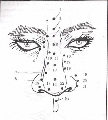 KInh huyệt xung quanh mũi