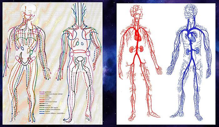 Hệ thống đường Kinh Lạc trong cơ thể người