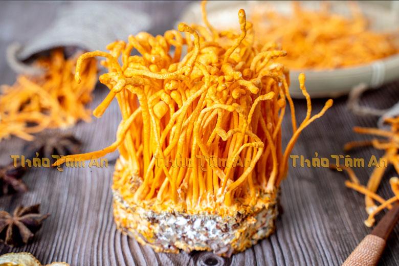 Nấm Đông trùng hạ thảo tươi Việt Nam